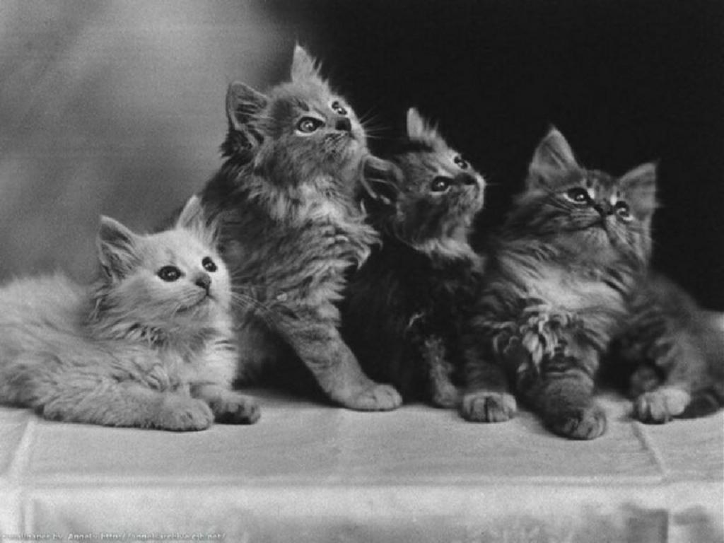 Acquistare Un Cucciolo Di Gatto Cosa Bisogna Sapere Anfiliguria